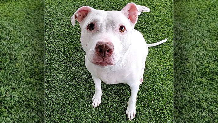 If you're looking to be a hospice home for this sweet girl, please call the shelter to set up a time to come meet her. Please contact 928-636-4223, ext. 7 for more information. (Chino Valley Animal Shelter)