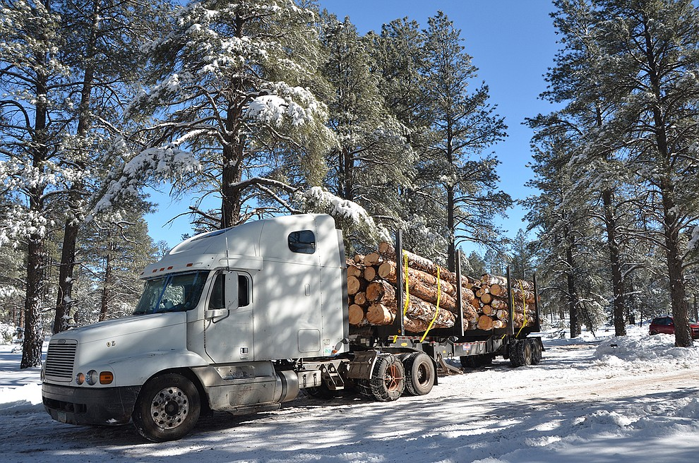 A logger removes trees on a thinning operation on Kaibab National Forest.