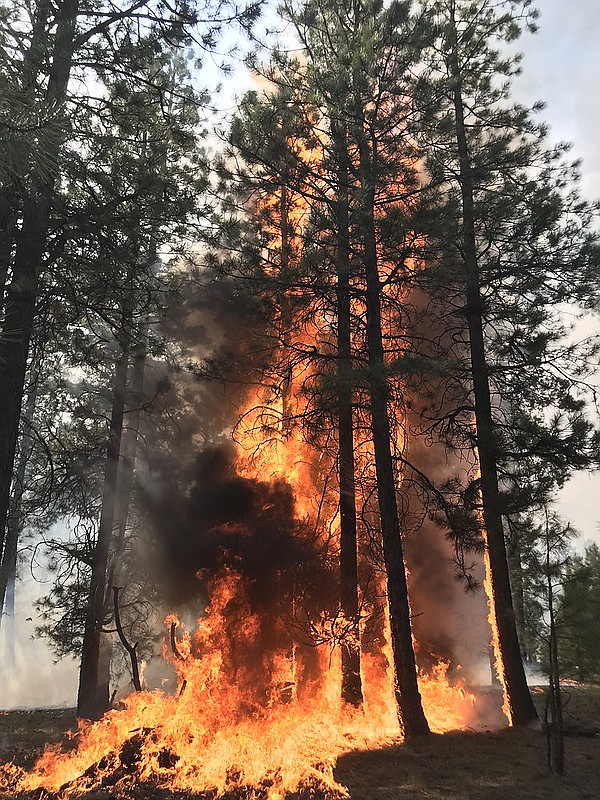 High severity fire was observed on approximately 10 percent of the Mangum Fire footprint. Fire managers use prescribed burns and thinning to prevent this type of extreme fire behavior.