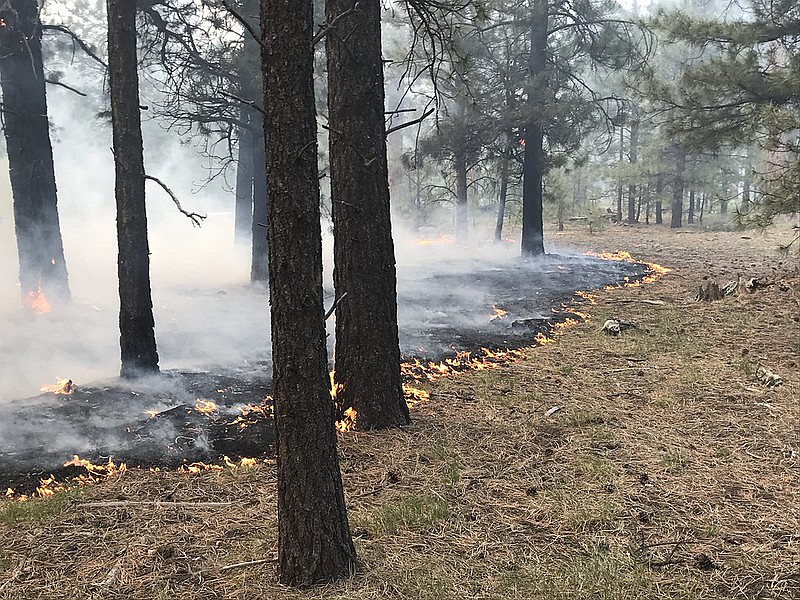 Fire managers say low intensity fire is good for healthy forests. About 50 percent of the fire behavior on the Mangum Fire was low intensity.
