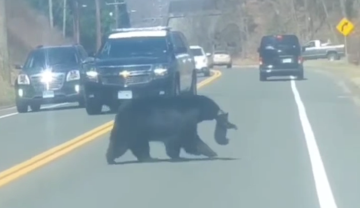 Image taken from video. (Winchester CT Police Department)