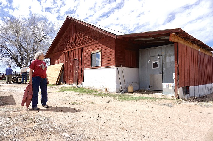 Chino Valley Historical Society President Kay Lauster stands in front of the old dairy barn on Thursday, April 1, 2021, at the Cooper Agricultural Center in Chino Valley. The group will be moving into the barn after swapping buildings with the Chino Valley FFA, which are both located on the center's property. (Aaron Valdez/Review)
