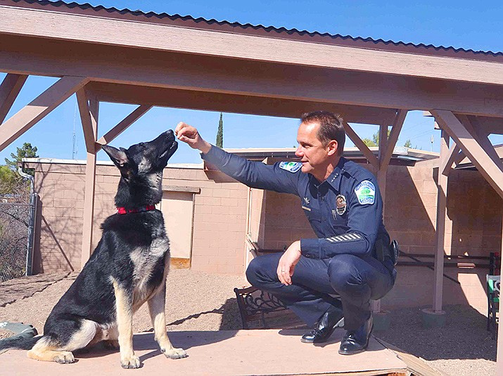 Cottonwood Police Chief Steve Gesell posed with a young German Shepherd named Ted inside the society's training area. VVN/Vyto Starinskas