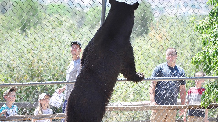 Heritage Park Zoo to host annual Community Appreciation Day on May 1