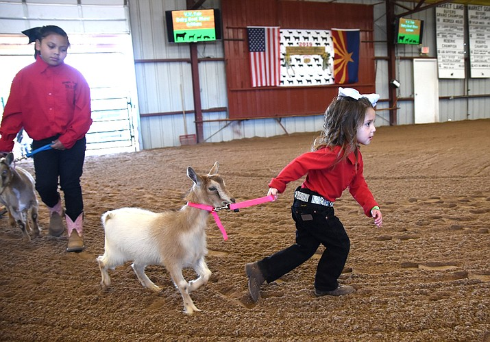 The 2021 Verde Valley Fair once again will be a live event after being almost entirely virtual in 2020. The livestock show and carnival get started Wednesday. VVN file/Vyto Starinskas