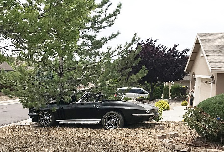 A 64-year-old Prescott man crashed his 1966 Chevrolet Corvette into a tree after going through multiple front yards at a high rate of speed in the 1400 block of Magnolia Drive. He was cited and released for misdemeanor reckless driving. (Prescott Police/Courtesy)