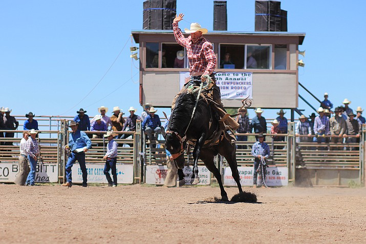 A cowboy rides a bucking bronc during the saddle bronc riding event at the Cowpunchers Reunion Rodeo in Williams. (Loretta McKenney/WGCN)
