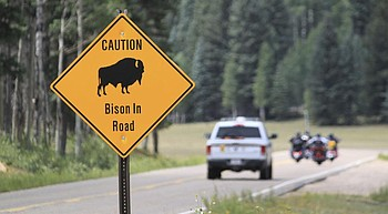Chance to shoot bison at Grand Canyon draws 45k applicants photo