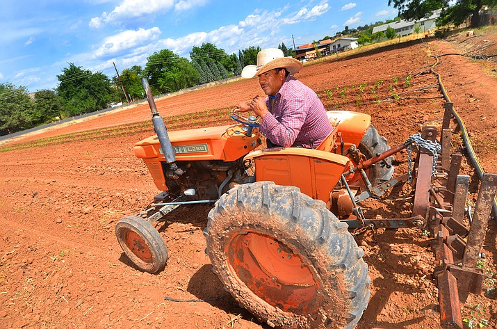 Roger Noguezsits plows his fields across from the Camp Verde Library under cloudy skies Tuesday. VVN/Vyto Starinskas