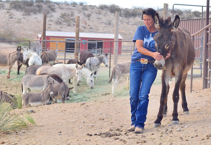 Carrie Singer is the founder/executive director of the Animal Guardian Network. VVN/Vyto Starinskas