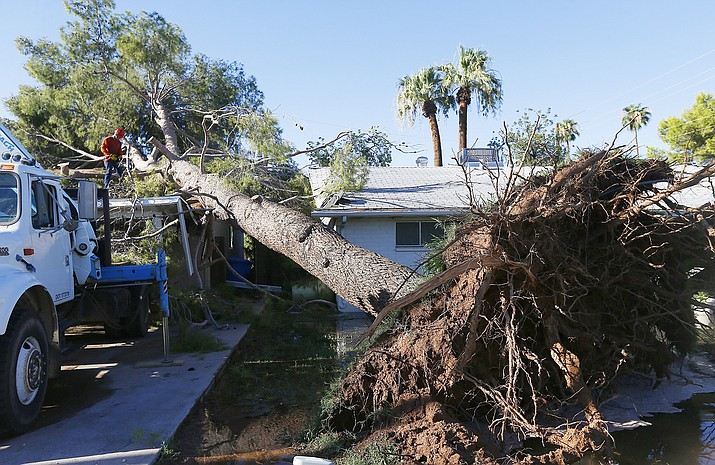 This 2017 file photo shows a tree removal worker cutting up a downed tree after it clipped one home and crushed part of another in Phoenix after a monsoon storm. (Ross D. Franklin/AP, file)