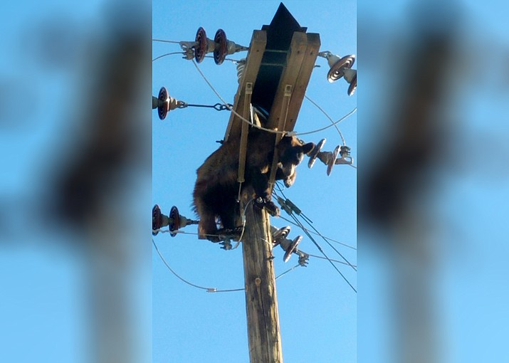 A bear in Arizona emerged unscathed from quite the power trip when it became stuck on a utility pole near Willcox, Ariz. (Photo\AZGFD)