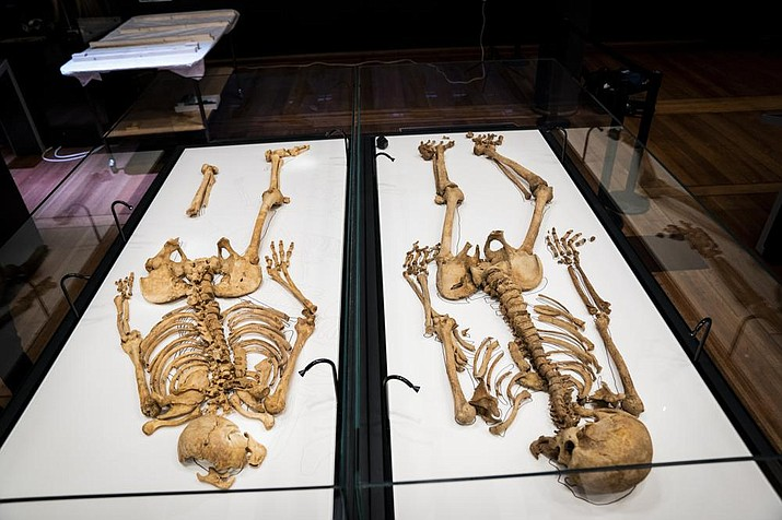 """Two skeletons lies in a showcase at The National Museum of Denmark Wednesday, June 9, 2021 in Copenhagen. The skeletons of two related Viking-era men, one who died in central Denmark and the other who was killed in England during a massacre ordered by a king, are set to be reunited for an exhibition opening in Copenhagen this month. Scientists on both sides of the North Sea have established a genetic link between the Norsemen. DNA tests showed """"that they are either half brothers or nephew and uncle,"""" University of Copenhagen geneticist Eske Willerslev said. (Ida Marie Odgaard/Ritzau Scanpix via AP)"""