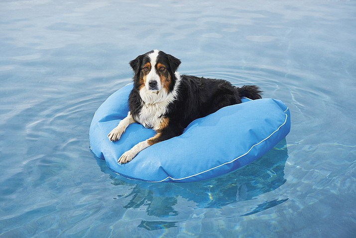 This image provided by Frontgate shows an inflatable for dogs. Don't forget the family pets; a nonporous, puncture-resistant floating dog bed at Frontgate comes in a bunch of colors and three sizes. (Frontgate via AP)