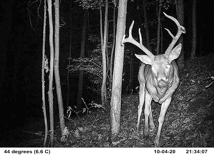 Game-trail cameras produce images such as this, detailing as well the time and day, even temperature outside, when wildlife are in the area — helping hunters to better track their targets. (Courier file)