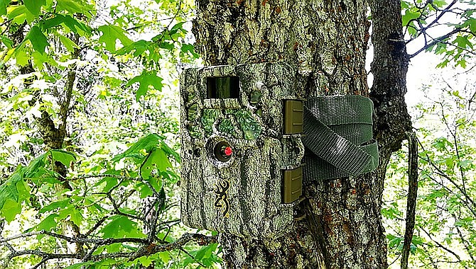 """Hunters will no longer be allowed to use game-trail cameras for """"the take or aid in the take of wildlife"""" as of January 2022. (Stock photo)"""