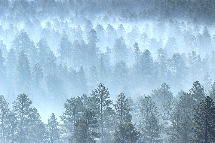 Smoke shrouds forest on the west flank of the Mangum Fire that burned in June 2020. (Photo/Kaibab National Forest)