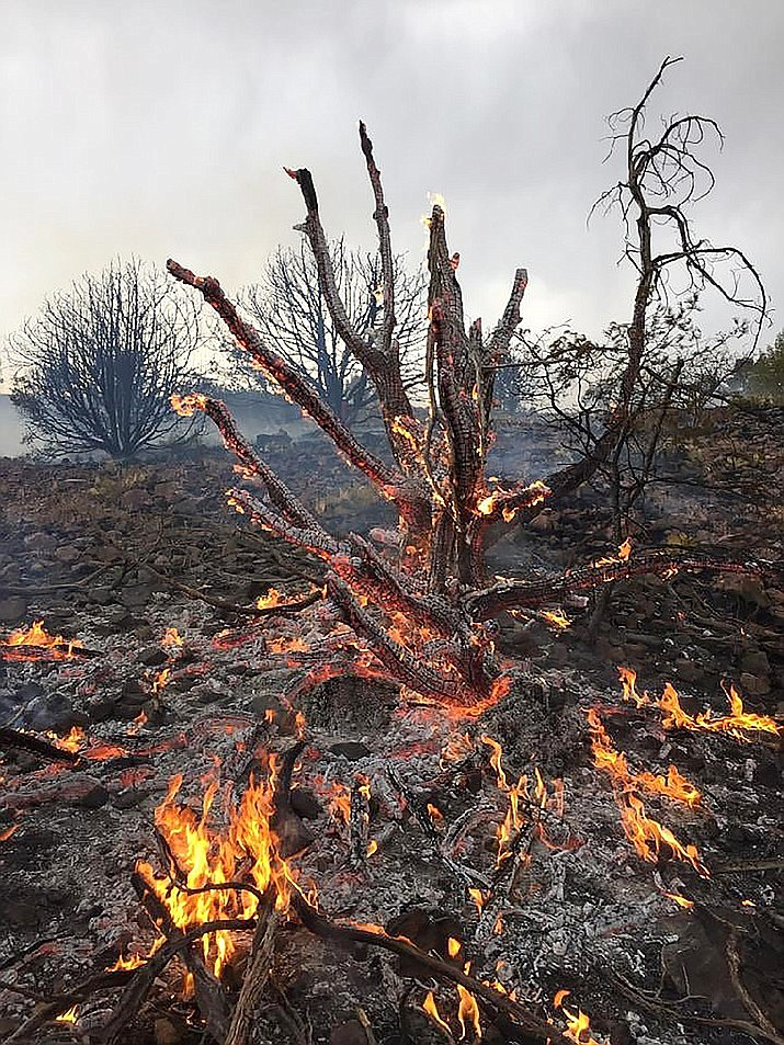 The Prescott National Forest and a variety of fire teams, including two hotshot crews, are fighting eight fires that resulted from lightning since Thursday, June 17, 2021. (Courtesy)