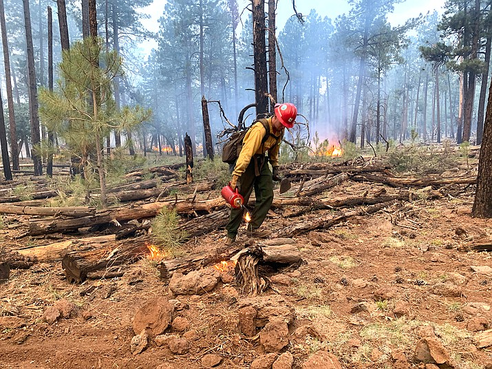 Firefighters conduct burnout operations on the Rafael Fire June 27 along Forest Road 538. (Photo/Michelle Herrin)