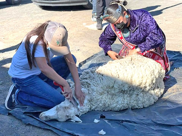 Miss Navajo Nation Shaandiin Parrish joined Indian Wells Chapter Summer Youth Employees in a sheep shearing demonstration June 30. (Photos/OPVP)