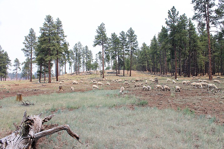 Coconino and Kaibab National Forests will rescind all fire restrictions at 6 a.m. Friday, July 16. (Loretta McKenney/WGCN)