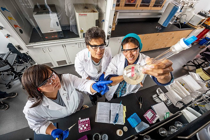 Dr. Jani Ingram and students, Andee and Jonathan are involved in cancer research at NAU. (Photo courtesy of NAU)