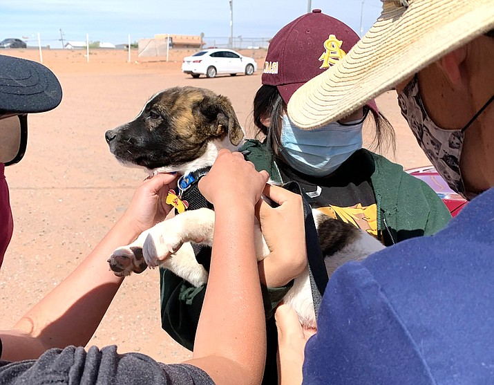 A mobile spay/neuter and vaccination clinic is held in Tuba City in May in conjunction with the Parker Project. Tuba City Humane Society helped more than 646 dogs and cats in 2020. (Photo courtesy of Tuba City Humane Society)