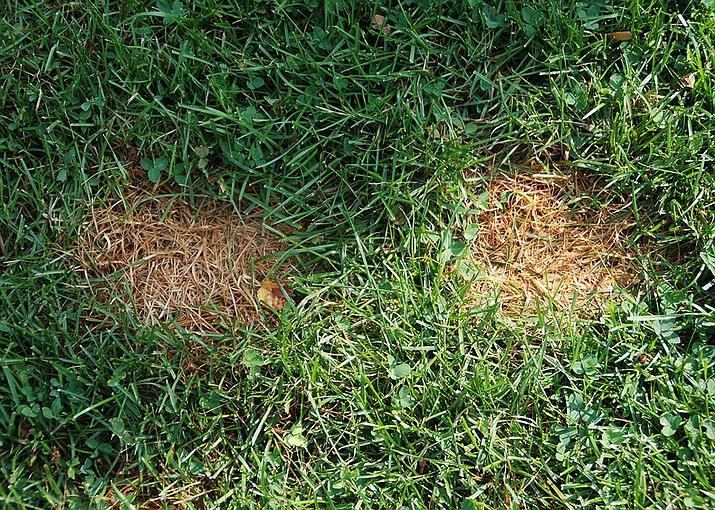 Fall is a good time to improve the health and appearance of a stressed lawn. (MelindaMyers.com/Courtesy)