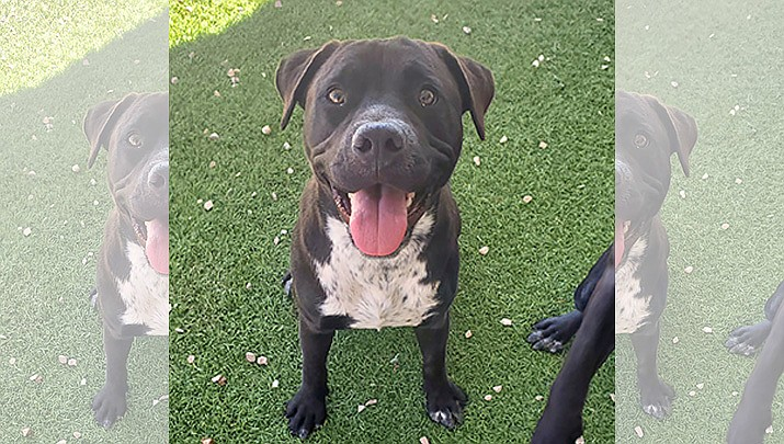 Cypress is an approximately 10-month-old mixed breed looking for his forever home. (Courtesy)