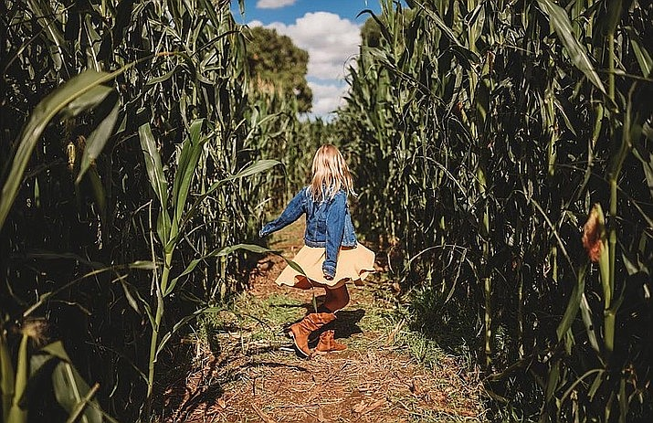 Admission to Mortimer Farm's Pumpkin Fest events allows you to, among other things, walk through the corn maze. For more information, visit mortimerfarmsaz.com. (Courtesy)