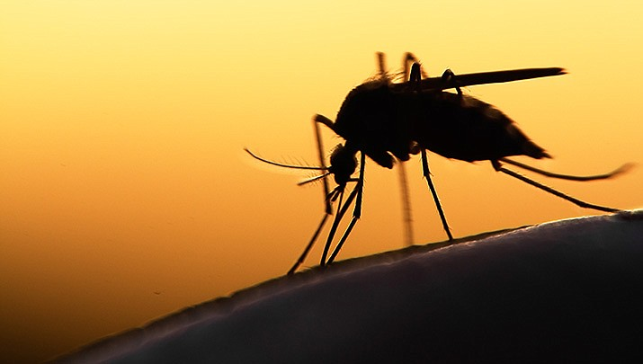 West Nile Virus has been detected in mosquitoes trapped in Mohave Valley by the Mohave County Department of Public Health. (Adobe image)