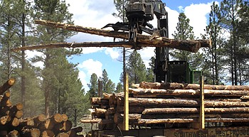 U.S. Forest Service hits brakes on Arizona restoration project photo