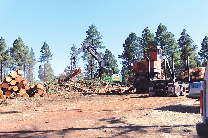 Despite the cancellation of the 4FRI Phase Two solicitation, forest restoration efforts continue on the south zone of Kaibab National Forest, including the 1,159-acre Saddle Timber Sale in Parks, Arizona Sept. 21. (Wendy Howell/WGCN)