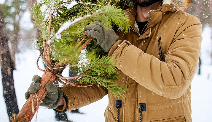 Officials with the Prescott National Forest recently announced that Christmas tree permits will be available for purchase starting Thursday, Oct. 14, 2021. Forest officials said 500 permits will be available to purchase online at recreation.gov, and 100 will be available at district offices. The Verde Ranger District is located at 300 E. Highway 260, Camp Verde. For more information, call 928-567-4121. (Independent file photo)
