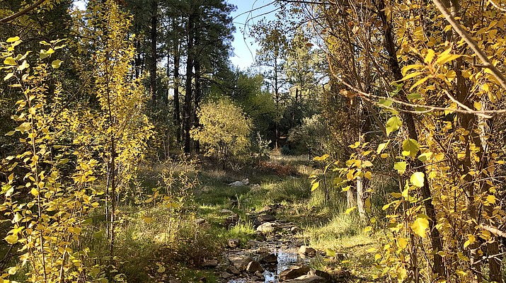 It's happening: Where to find Prescott's fall colors and when to catch them