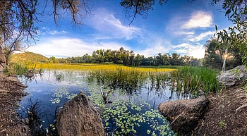 Goldwater, Granite Basin among lakes experiencing fish die-off photo